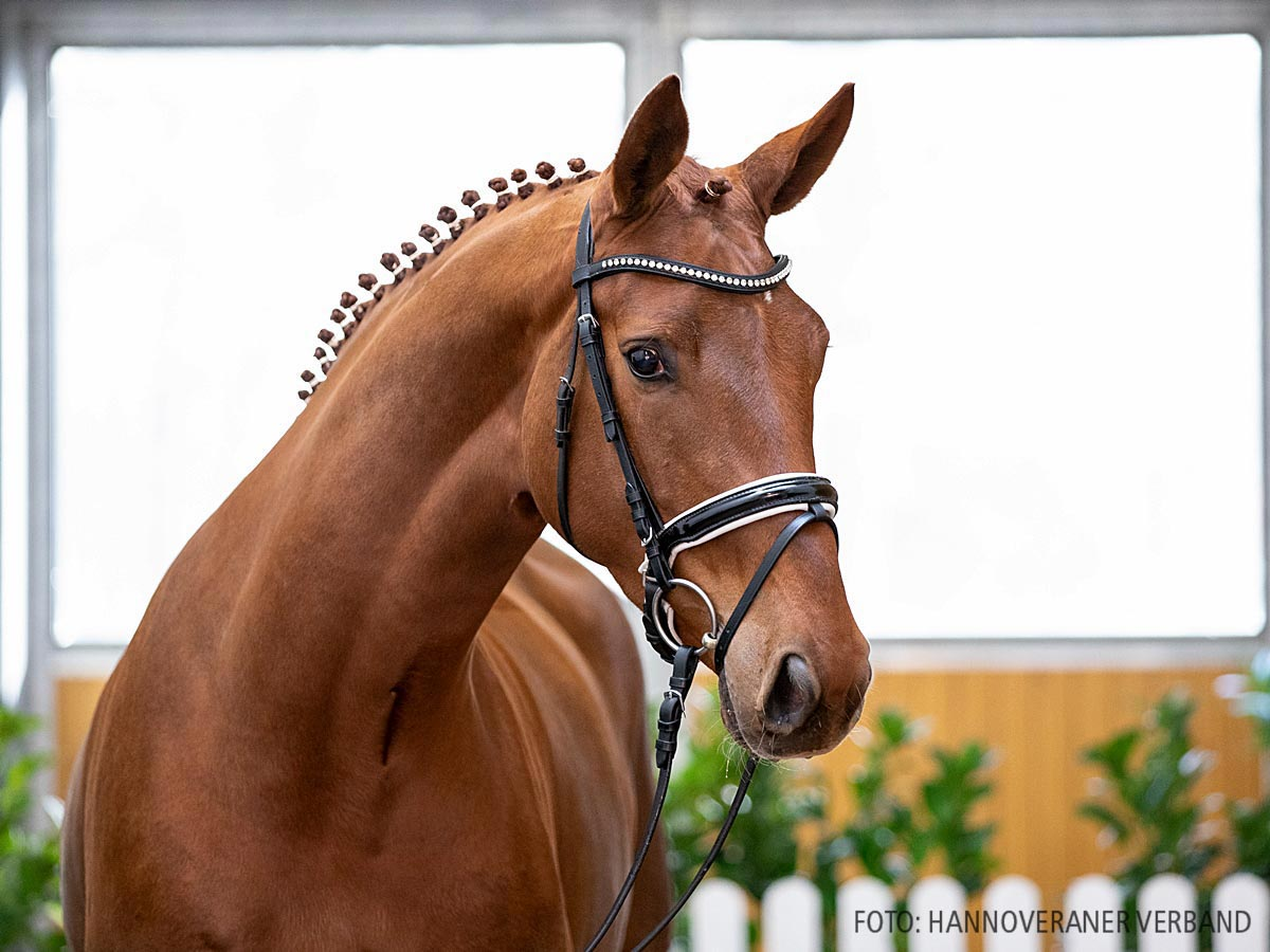 Fräulein Finesse by Floriscount / Donnerhall | HORSE24